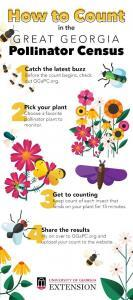 How to Count in the Great Georgia Pollinator Census