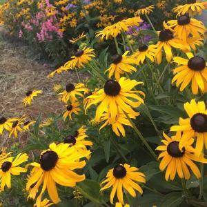 Join the Rosalynn Carter Butterfly Trail