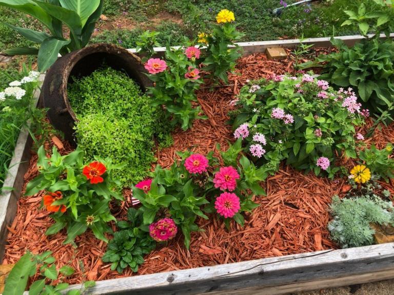 Sumter Middle School Garden